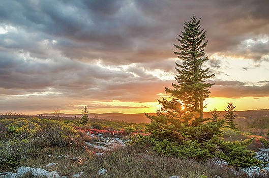 Julie Richie - Dolly Sods Sunset