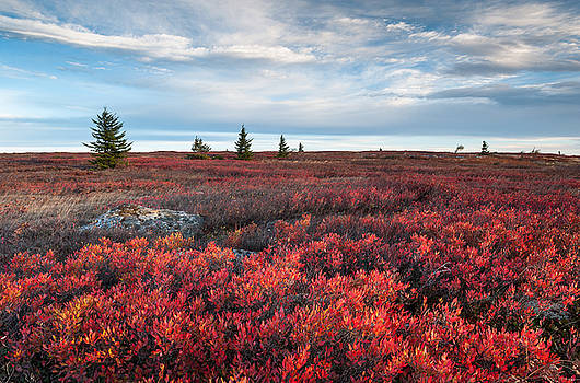 Dolly Sods Wilderness Area West Virginia Autumn Scenic by Mark VanDyke