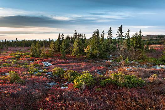 Dolly Sods Wilderness Area West Virginia by Mark VanDyke