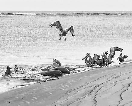 Dolphin and Pelican Party by Patricia Schaefer