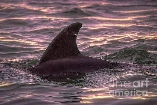 Paulette Thomas - Dolphin In The Marshwalk