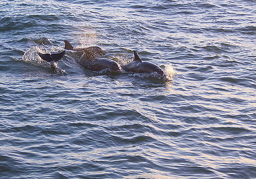 Dolphin Pod by Carol Turner