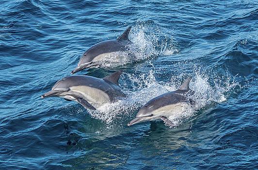 Dolphin TriPod by Randy Straka