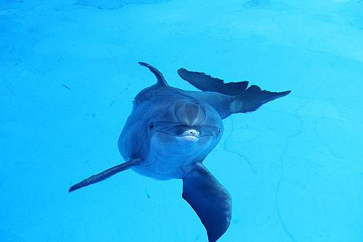 Dolphin Underwater by Theresa Willingham
