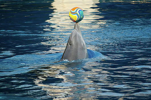 Dolphin with a ball by Victoria Savostianova