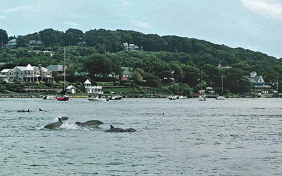 Dolphins in Northport Bay by Tori Yule