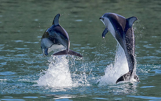 Dolphins by Randy Hall