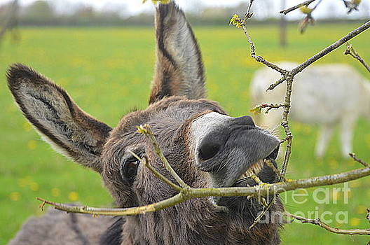 Donkey by Andy Thompson