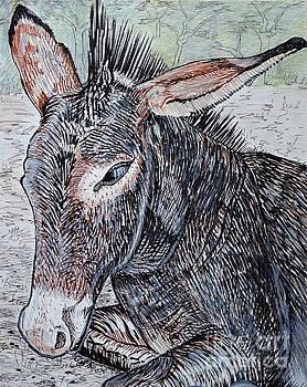 Caroline Street - Donkey at Rest