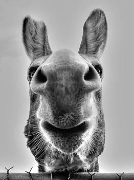 Donkey by Charlotte Schafer