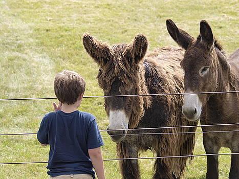Donkeys and Boy by Jennifer Whiteford