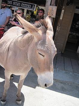 Donkeys At Oatman by JoAnn Tavani