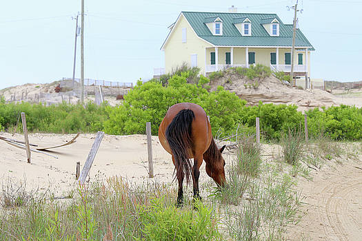 Don't be a Horse's A-- by David Stasiak