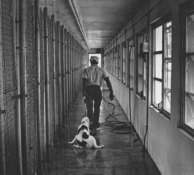 Doomed dog by Jim Wright