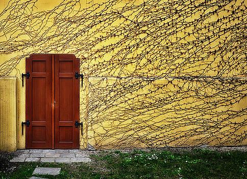 Doorway and Ivy by Claudio Bacinello