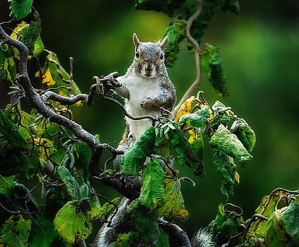 Paul W Sharpe Aka Wizard of Wonders - Dorky Our Neighbourhood Squirrel