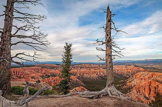 Dormant trees at Bryce Canyon by Daniela Constantinescu