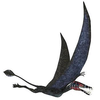 Corey Ford - Dorygnathus Pterosaur over White