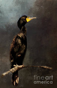 Double-Crested Cormorant by Pam  Holdsworth