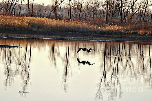 Double Reflection by Yumi Johnson