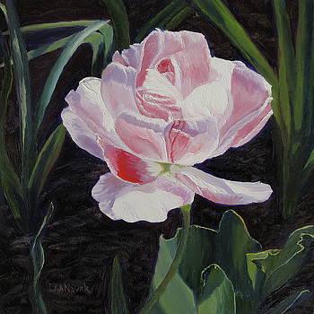 Lea Novak - Double Sassy Tulip