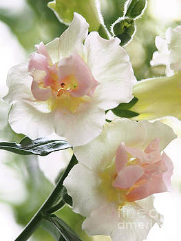 Double Snapdragons On A Crisp Spring Day by Dorothy Lee