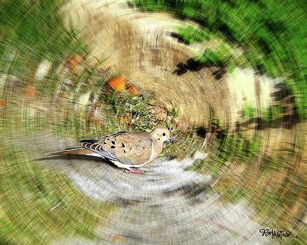 Dove  #9225_2 by Barbara Tristan