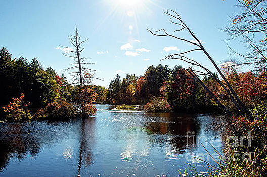 Dover Fall Light by Carolyn Abell Hodges