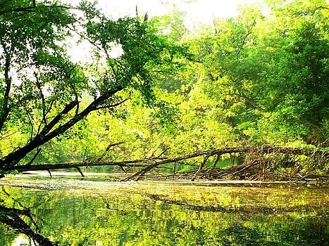 Down a Creek by Matthew Klaben