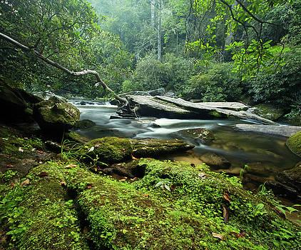 Down by the Riverbank - Nantahala Forest North Carolina by Matt Tilghman