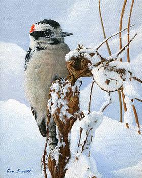 Downy Woodpecker  by Ken Everett