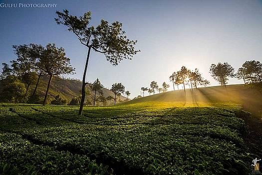 Dr Michael Duplessie,Roam amidst the tea gardens in Munnar by Dr Michael Duplessie MD
