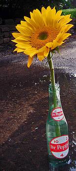 Jon Baldwin  Art - Dr Pepper and Sunflower