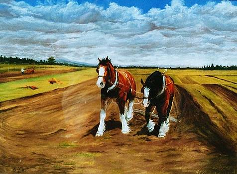 Draft Horses Oxley Island NSW by Louise Green