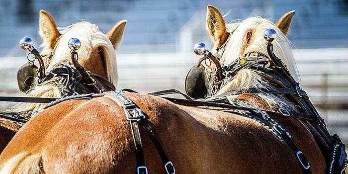 Draft Horses Ready by Dawn Romine