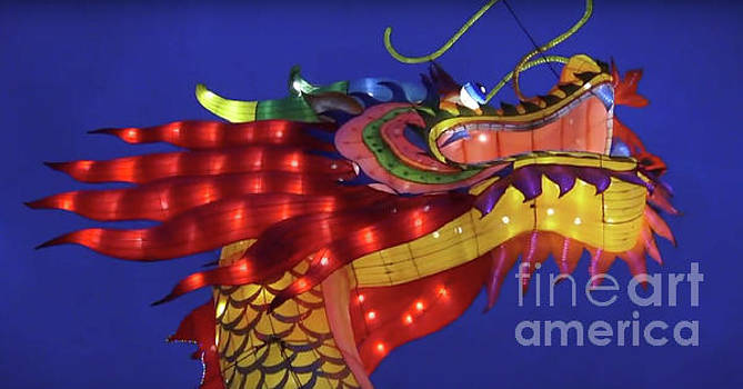 Dragon Lantern by Karen Francis