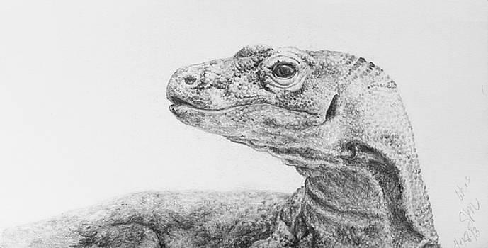 Dragon by Sarah Mushong