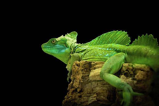 Dragon Visions by Bonnie Follett