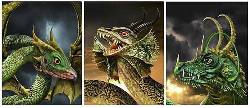 Dragon Watching by Craig Carl