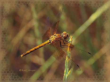 Kae Cheatham - Dragonfly 1