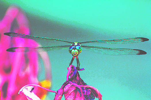 Dragonfly 2 by Alicia Zimmerman