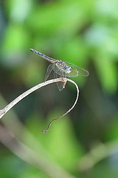 Dragonfly 2 by Jim Clark