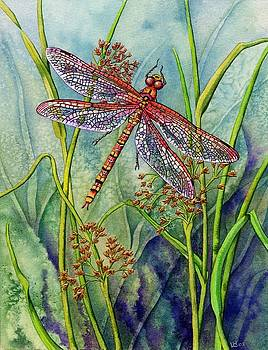 Dragonfly and Common Rushes by Lynne Henderson