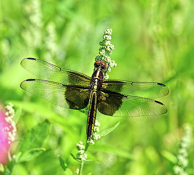 Dragonfly beauty by Ronda Ryan