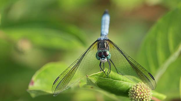 Dragonfly Closeup by Jack Nevitt