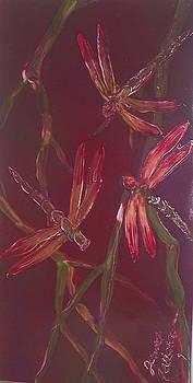 Dragonfly Dance by Juan Carlos Feliciano