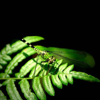 Dragonfly by David Weeks