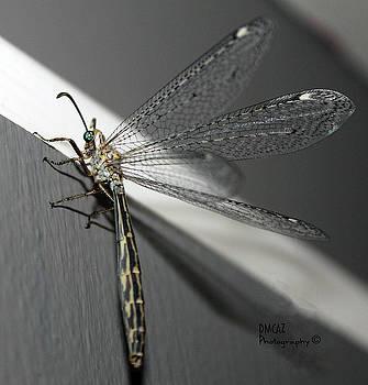 Dragonfly by Deanne Chapman