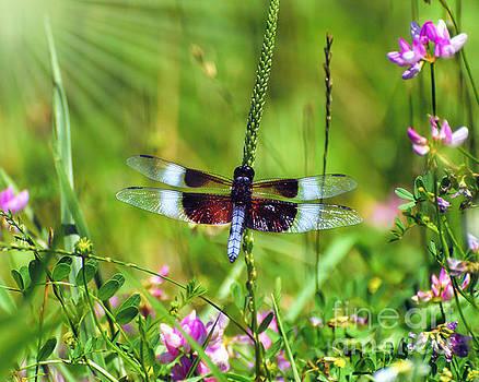 Dragonfly Delight by Kerri Farley