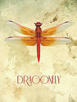 Dragonfly III by Binka Kirova